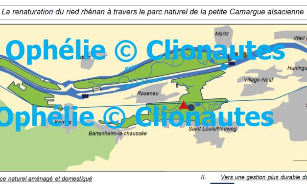 La renaturation du ried rhénan à travers la petite Camargue alsacienne
